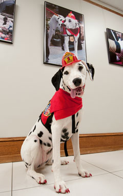 Photo of Molly the Fire Safety Dog